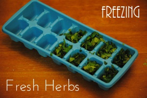 Freezing Fresh Herbs Helpful Kitchen Tips and Tricks