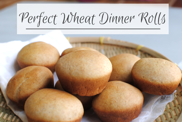 Wheat Dinner Rolls Perfect Wheat Dinner Rolls